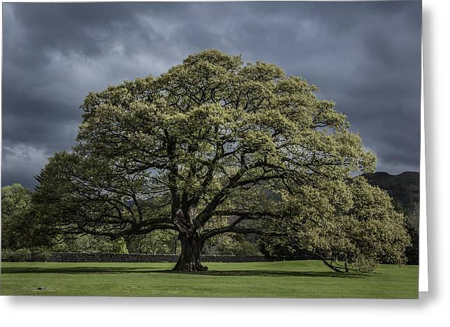 Beauty Greeting Cards - The Old Oak of Glenridding v2.0 Greeting Card by Chris Fletcher