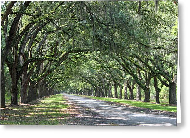 Tree Art Giclee Greeting Cards - The Old South Series I Greeting Card by Suzanne Gaff
