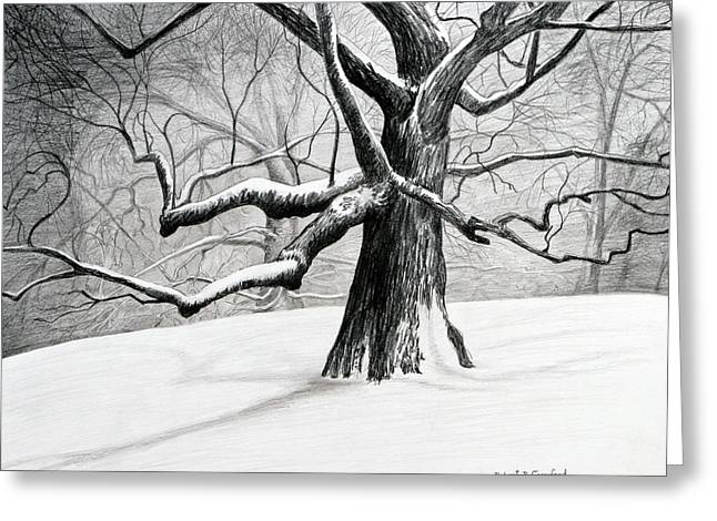 Snowed Trees Drawings Greeting Cards - The Old Tree Greeting Card by Bob Crawford