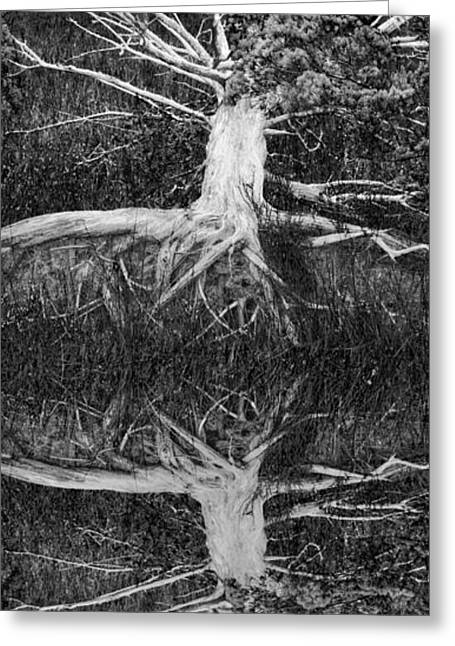 Reflections In River Greeting Cards - The Old Tree Greeting Card by Debra and Dave Vanderlaan