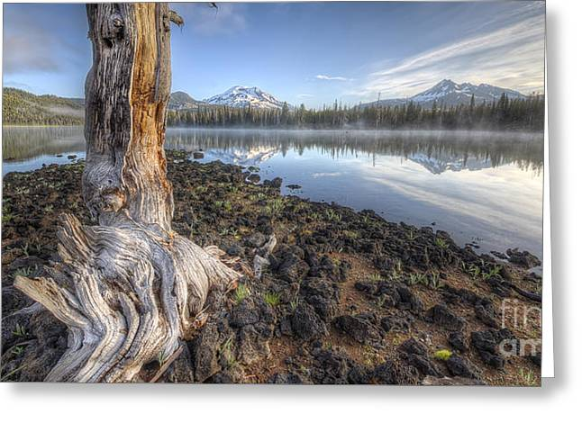 Oregon Photos Greeting Cards - The Old Tree Trunk Greeting Card by Twenty Two North Photography