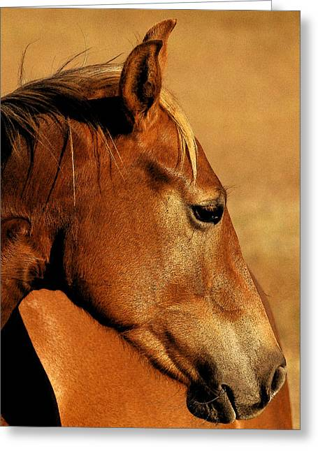 Wimberley Greeting Cards - The Orange Horse Greeting Card by Robert Anschutz