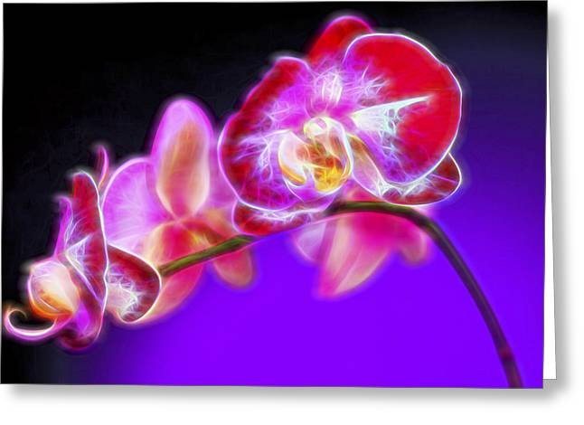 The Orchid Watches II Greeting Card by Jon Glaser