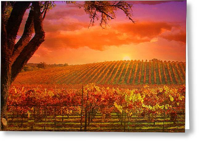 Vineyard Landscape Photographs Greeting Cards - The other side of Oz Vineyard Greeting Card by Stephanie Laird