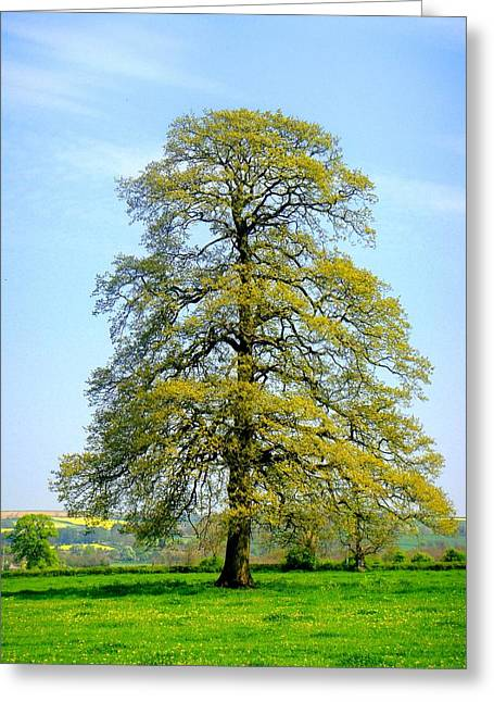 Roberto Alamino Greeting Cards - The Other Tree Greeting Card by Roberto Alamino