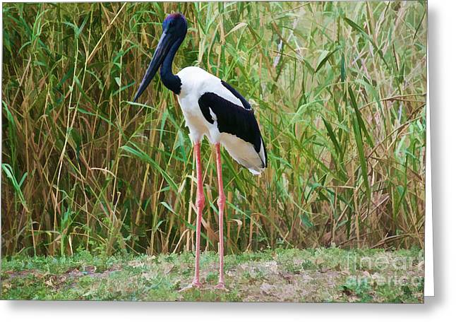 Wildlife Greeting Cards - The Painted Stork  Greeting Card by Judy Kay