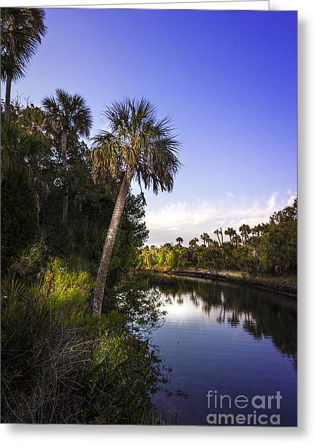 The Palm Stream Greeting Card by Marvin Spates