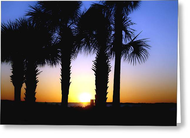 Ocean Art. Beach Decor Greeting Cards - The Palms At Sunset Greeting Card by Debra Forand
