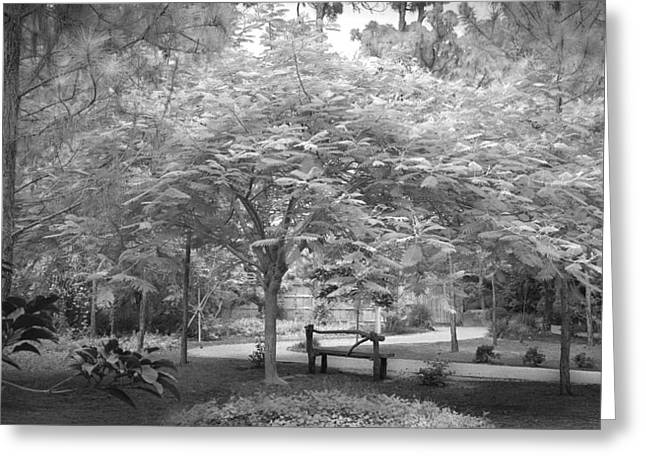 The Park Bench Greeting Card by Louis Ferreira