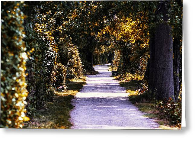 Fall Grass Greeting Cards - The Path Greeting Card by Zac Lanier