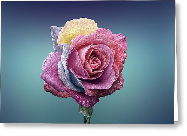 Moist Greeting Cards - The Patriotic Rose Greeting Card by Bess Hamiti