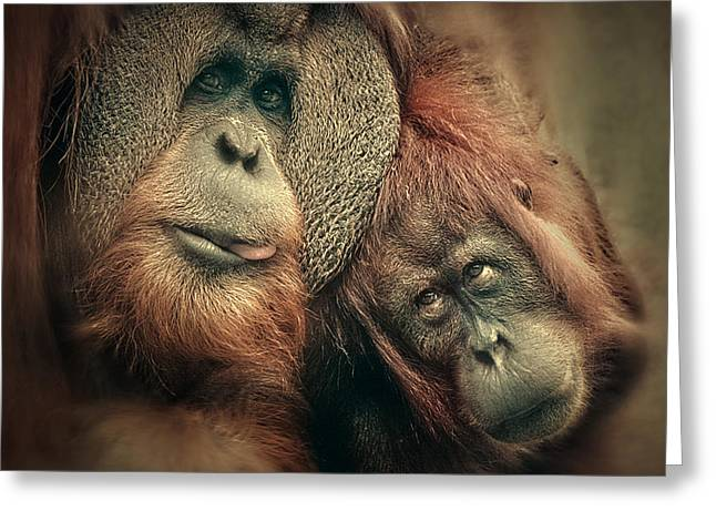 Orang-utans Greeting Cards - The People Of The Forest Greeting Card by Antje Wenner