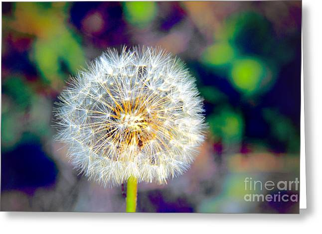 Floral Digital Art Greeting Cards - The Perfect Dandelion Greeting Card by Mariola Bitner