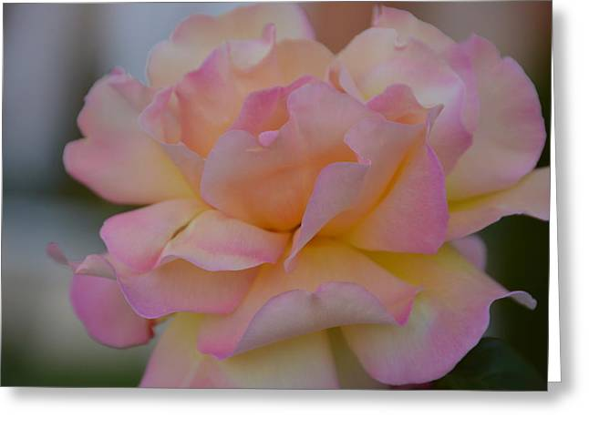 Rose Petals Greeting Cards - The Perfect One Greeting Card by Lena Kouneva