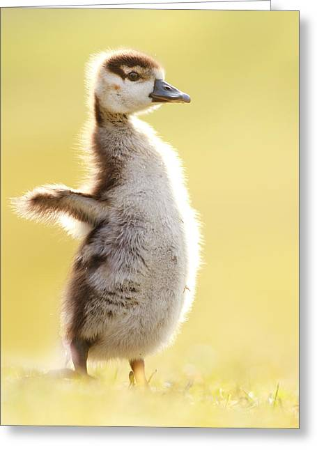 The Pinguin Simulator Greeting Card by Roeselien Raimond