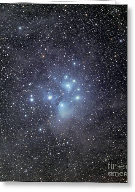 The Pleiades Surrounded By Dust Greeting Card by Phillip Jones