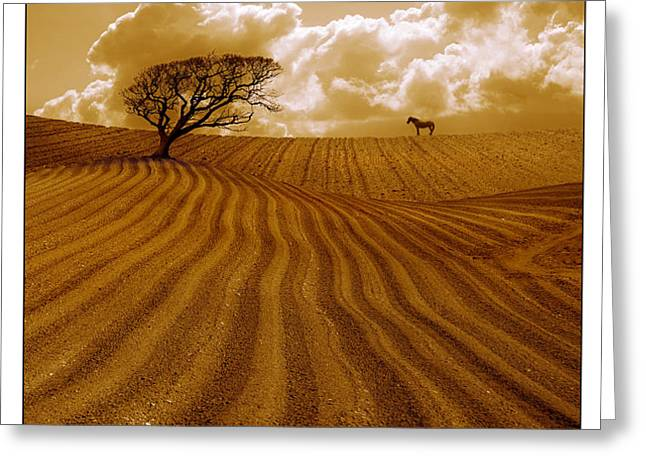 The Ploughed Field Greeting Card by Mal Bray