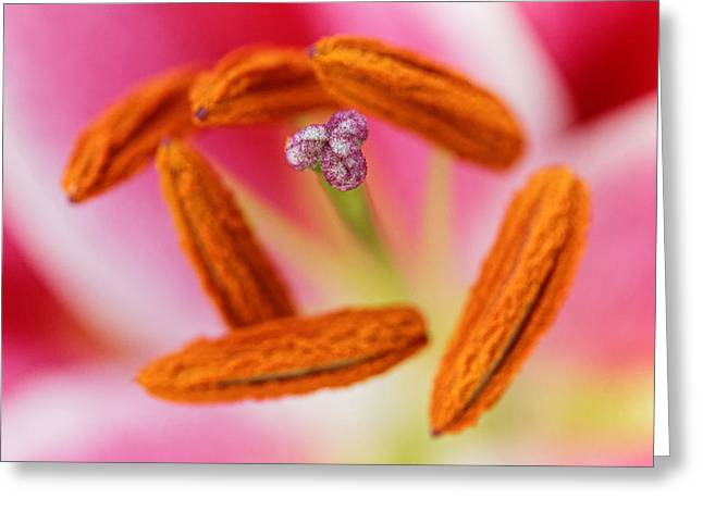 Day Lilly Greeting Cards - The Point of Focus Greeting Card by Ric La Ban