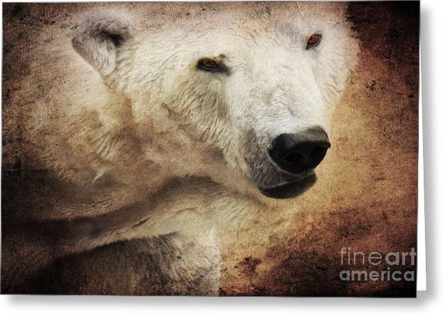 Angela Doelling Ad Design Photo And Photoart Greeting Cards - The polar bear Greeting Card by Angela Doelling AD DESIGN Photo and PhotoArt