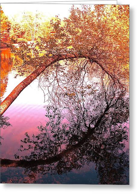 Westport Ct Greeting Cards - The Pond 1 Greeting Card by Mimi Seton