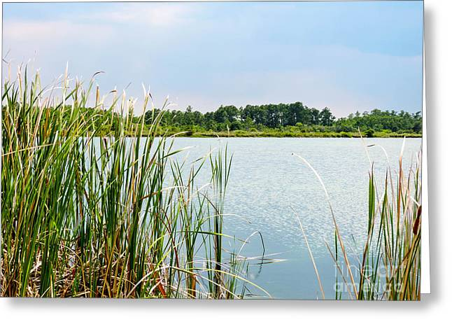 Saw Greeting Cards - The Pond Greeting Card by Marilee Noland