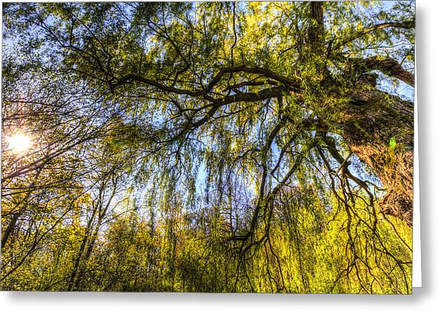 Reflecting Water Greeting Cards - The Pond Side Trees Greeting Card by David Pyatt