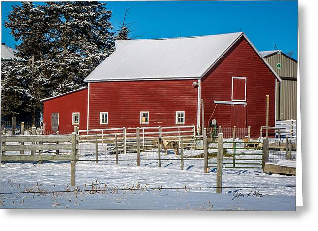 Grazing Snow Greeting Cards - The Poney and the Cat Barn Greeting Card by Jeffrey Henry