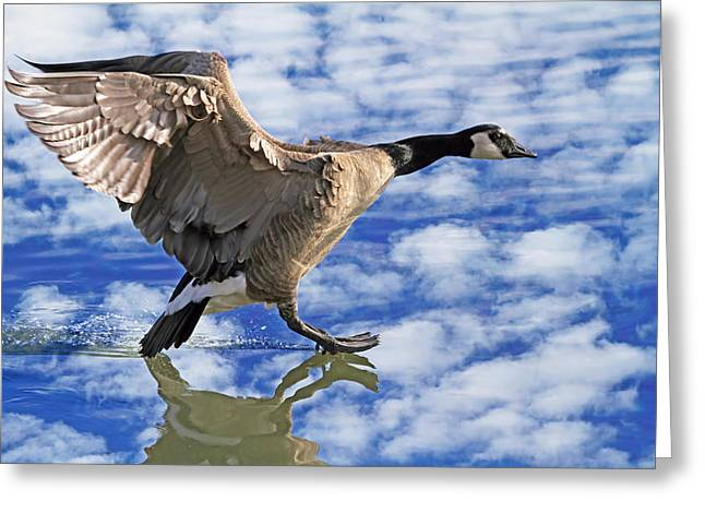 Reflection In Water Greeting Cards - The Professional Greeting Card by Donna Kennedy
