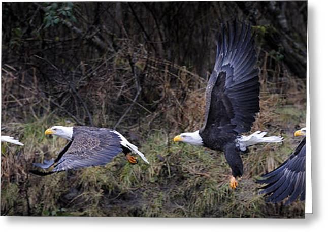 Award Greeting Cards - The promnade of Bald Eagle Greeting Card by Yoshiki Nakamura