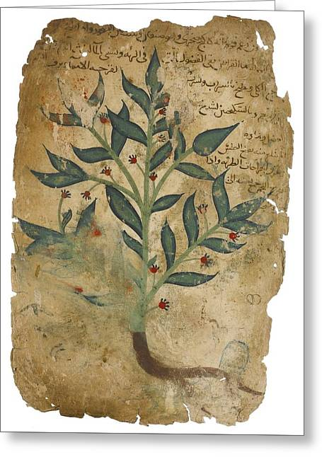 The Properties Of Plants Greeting Card by Dioscorides