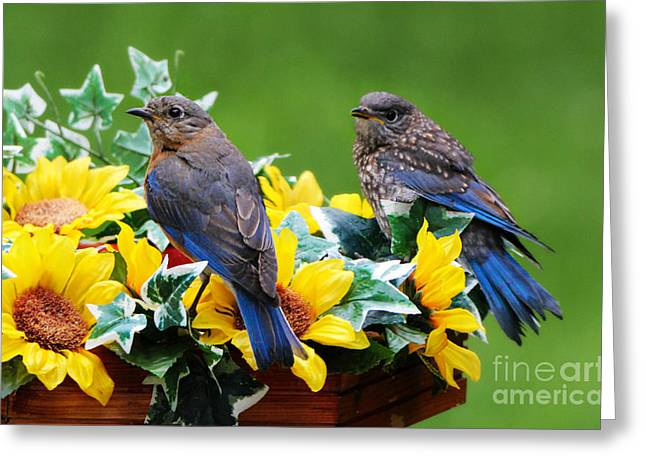 Print Photographs Greeting Cards - The Protection Of Mother Greeting Card by Tina  LeCour