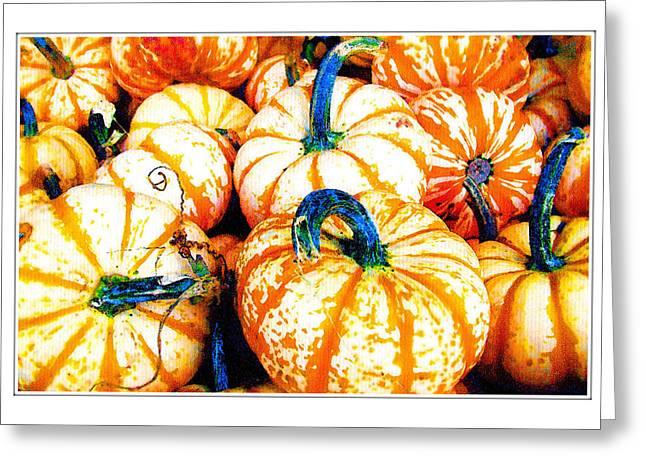 Mini Pumpkins Greeting Cards - The Pumpkins are back Greeting Card by Margaret Hood