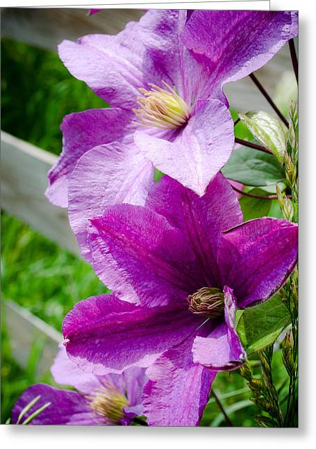 Amy Turner Greeting Cards - The Purple Flowers Greeting Card by Amy Turner