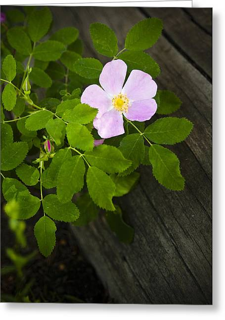 Recently Sold -  - Botany Greeting Cards - The Purple Flower Greeting Card by Chad Davis