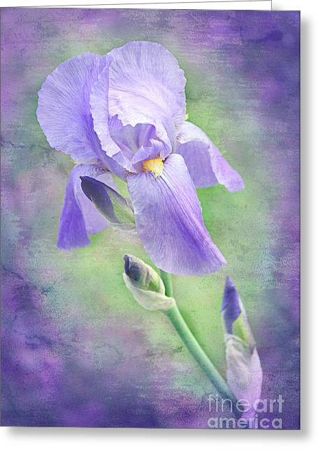 Close Focus Floral Mixed Media Greeting Cards - The Purple Iris Greeting Card by Andee Design