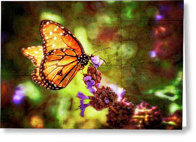 Queen Butterfly Greeting Cards - The Queen  Greeting Card by Saija  Lehtonen
