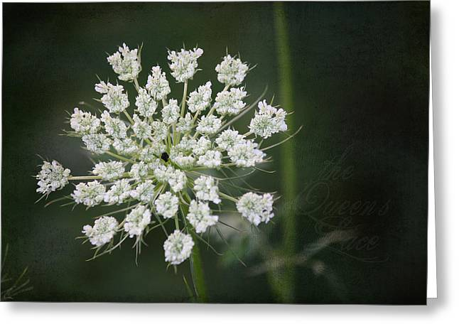 Daucus Greeting Cards - The Queens Lace Greeting Card by Teresa Mucha