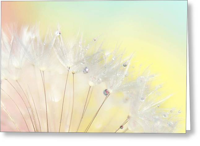 Pale Pink Greeting Cards - The Rainbow Connection Greeting Card by Amy Tyler