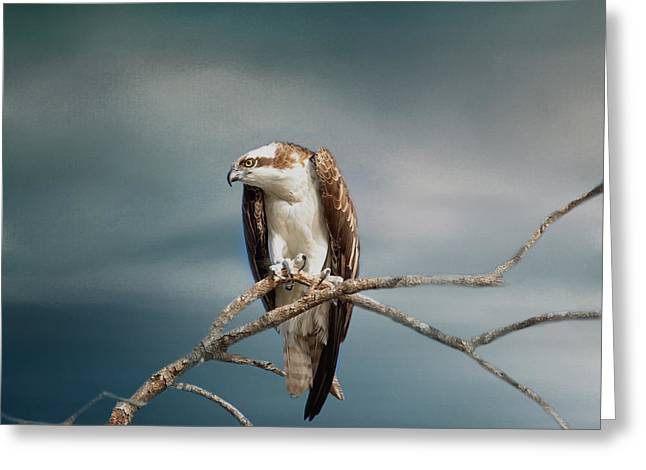 The Raptor - Osprey Greeting Card by Kim Hojnacki