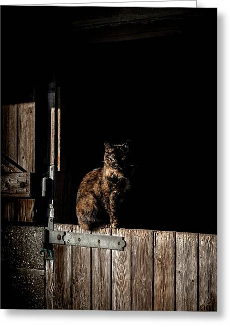The Rat Catcher Greeting Card by Paul Neville