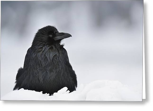 Ravens Greeting Cards - The Raven Greeting Card by Loulou Beavers