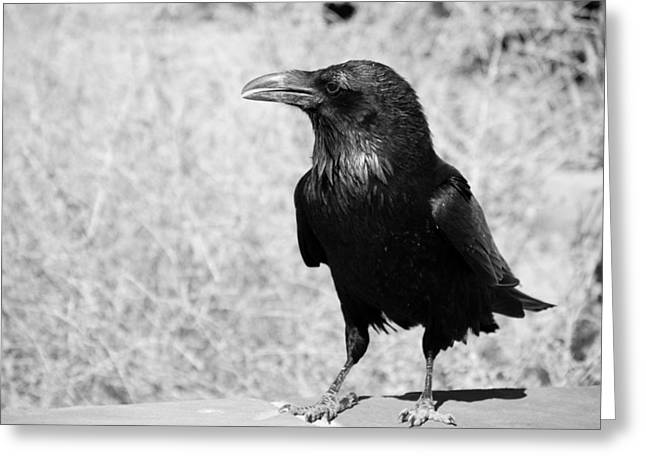 Photos Of Birds Greeting Cards - The Raven Greeting Card by Susanne Van Hulst