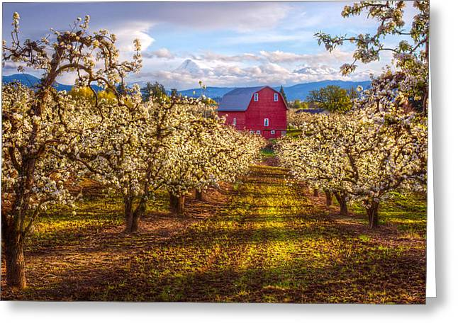 Hood River Oregon Greeting Cards - The Red Barn Greeting Card by Patrick Campbell