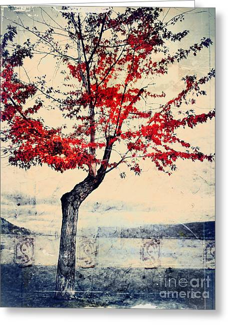 The Red Tree At Okanagan Lake Greeting Card by Tara Turner