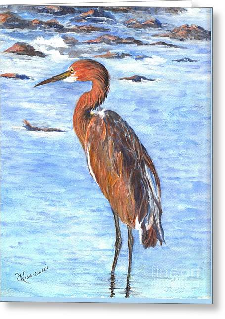 Sunset Greeting Cards Drawings Greeting Cards - The Reddish Egret of Florida Greeting Card by Carol Wisniewski