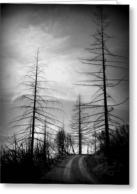 The Road Not Taken    Up On Hwy 2509 Greeting Card by Marie Neder