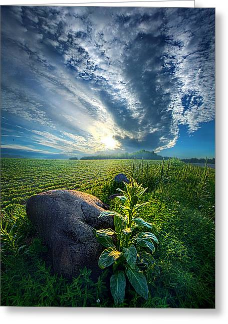 Green Leafs Greeting Cards - The Rock Greeting Card by Phil Koch