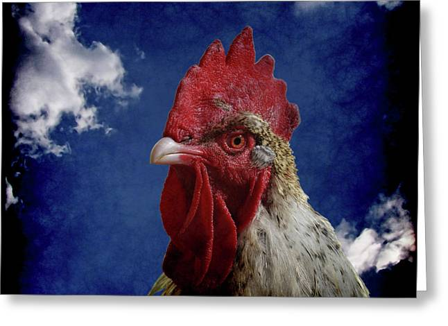 The Rooster Greeting Card by Ernie Echols