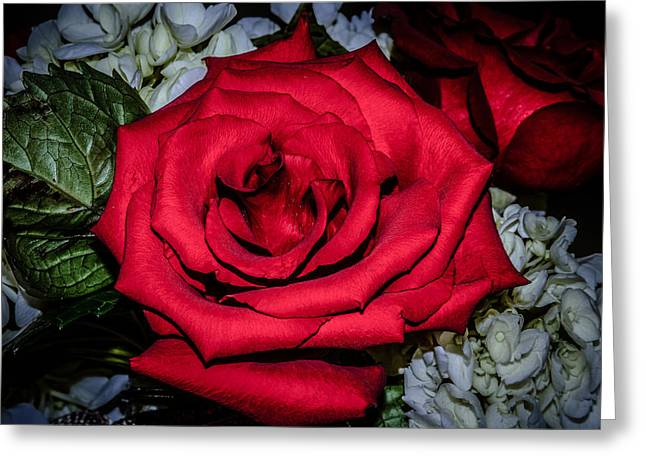 Rose Petals Greeting Cards - The Rose Greeting Card by Brian Alberghini