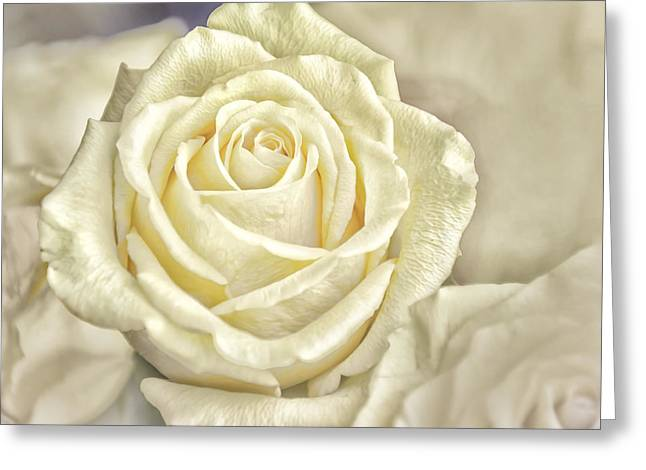 White Digital Art Greeting Cards - The Rose Greeting Card by Louise Hill